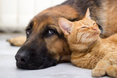cat and dog resting